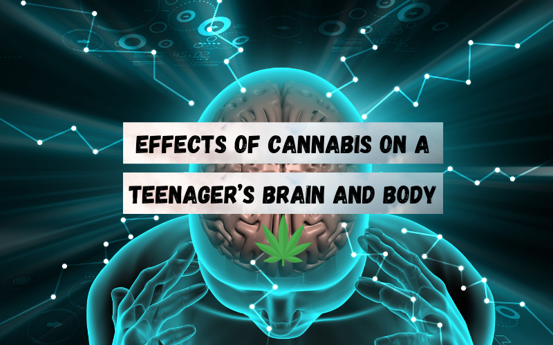 Effects of Cannabis on a Teenager's Brain and Body los angeles ca